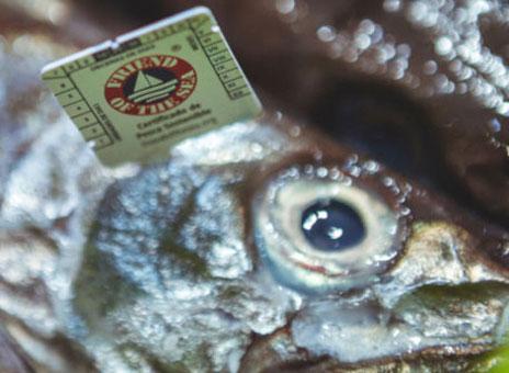 Merluza con certificado Friend of the Sea